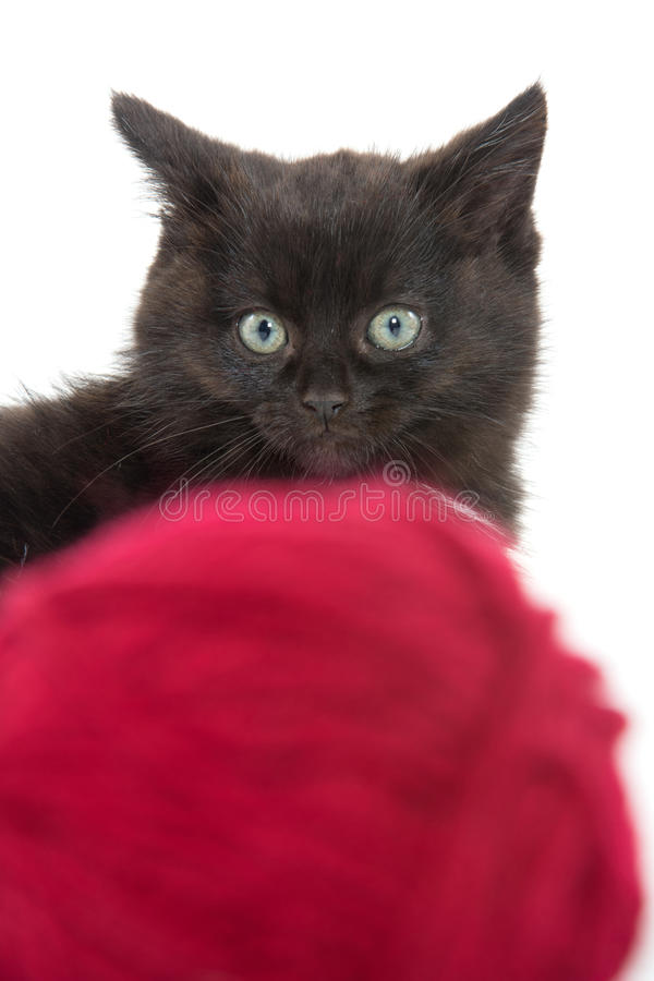 Cute black kitten and red ball of yarn royalty free stock photos