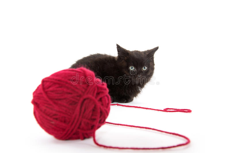 Cute black kitten and red ball of yarn royalty free stock image