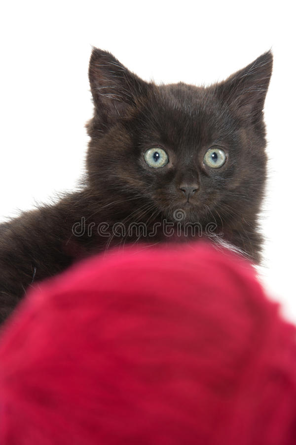 Cute black kitten and red ball of yarn stock photo