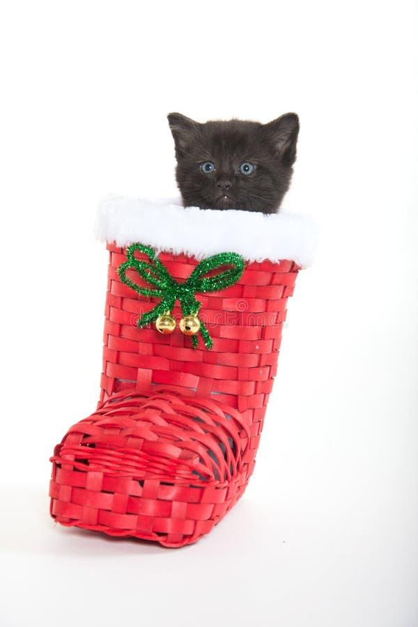 Cute black kitten in shoe royalty free stock photo
