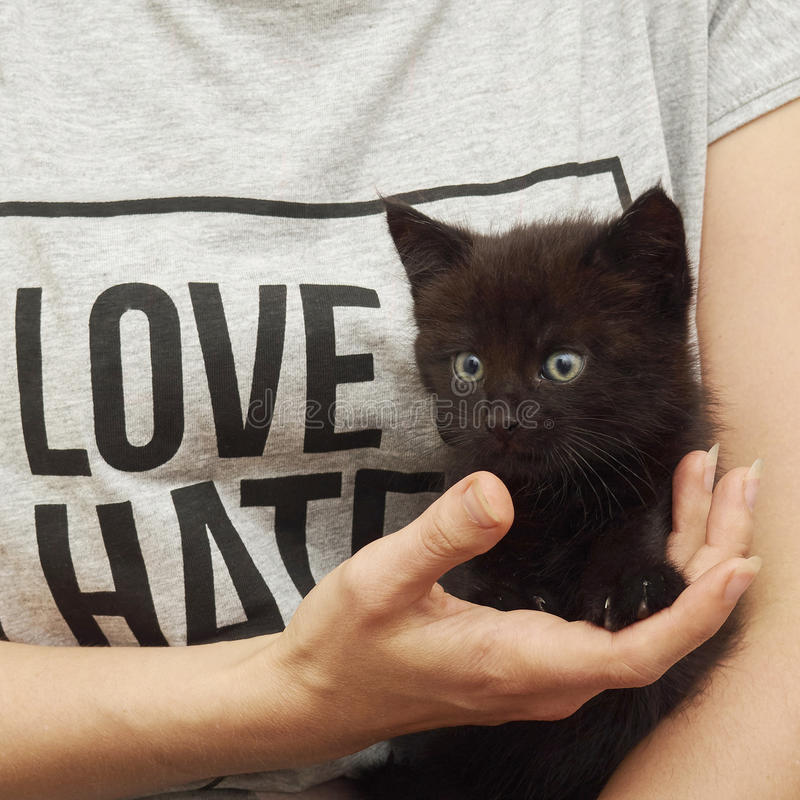 Cute black kitten on womans hands love or hate royalty free stock photo