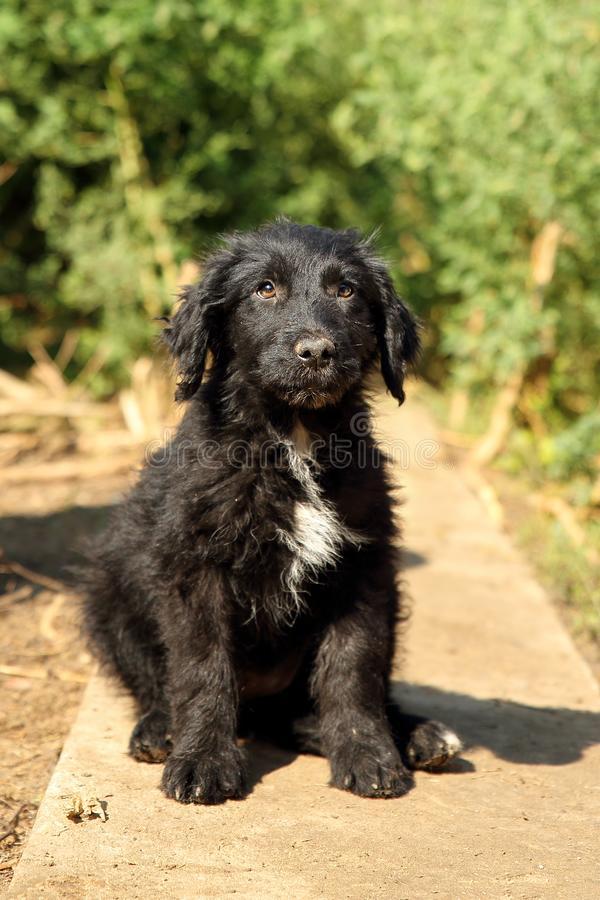 Cute, black with little white, fluffy puppy dog, found abandoned on the street, looking sad and guilty. Cute, black with little white, fluffy puppy dog, found stock photography