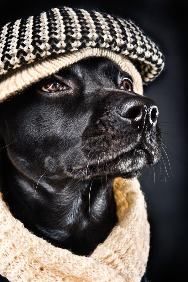Download Cute black mutt stock image. Image of domestic, humanization - 12523239