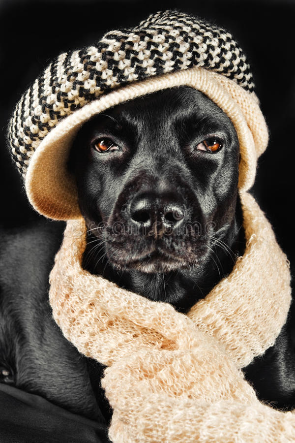 Download Cute black mutt stock image. Image of adorable, autumn - 12523271
