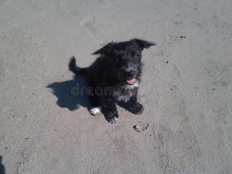 Cute black pappie looks up beutifull sand beach royalty free stock photos