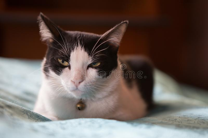 Cat is drowsy stock image
