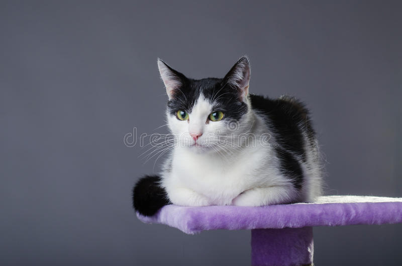 Cute Black And White Cat With Green Eyes, Portrait. Stock Image ...