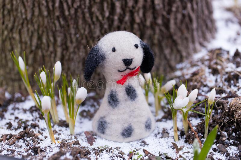 Cute black and white felt toy dog standing among white crocuses with a light sprinkling of fresh snow. At the foot of a tree royalty free stock photo