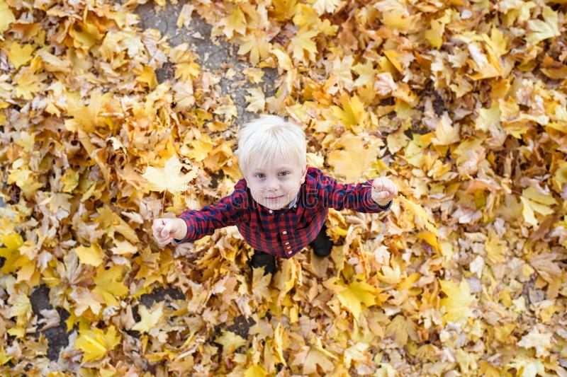 Cute blond boy stands in a autumn leaves and looks up. Top view. Autumn concept royalty free stock images