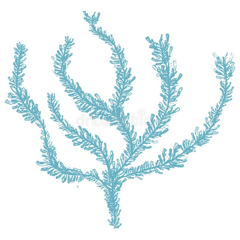 Cute blue underwater seaweed cartoon vector illustration motif set. Hand drawn isolated coral reef elements clipart for nautical vector illustration
