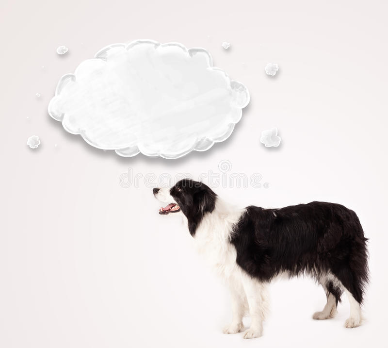 Cute Border Collie With Empty Cloud Royalty Free Stock Images