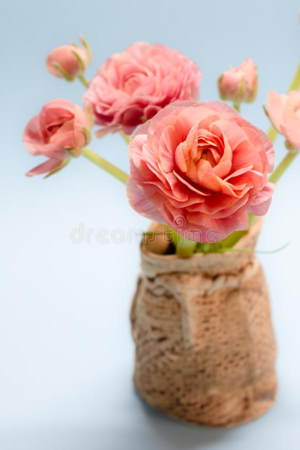 Cute bouquet of gentle rose ranunculuses on a blue background stock photos