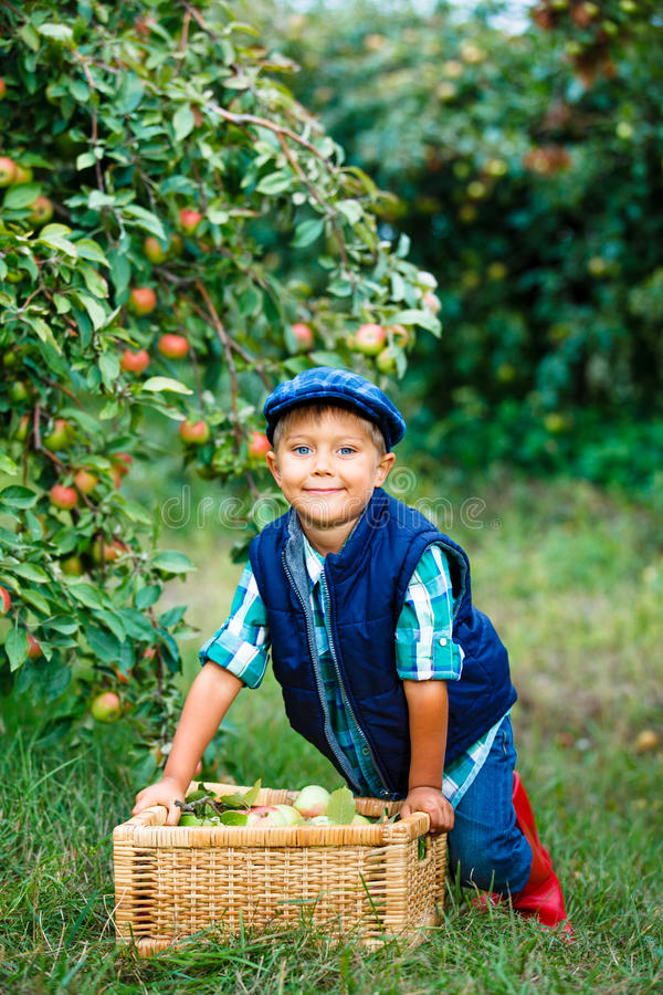 Download Cute boy in apple orchard stock photo. Image of grass - 33498418