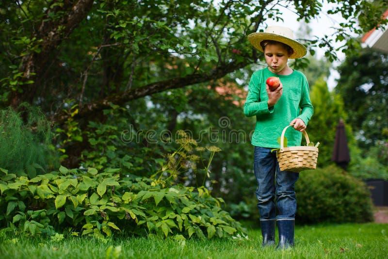 Cute Boy With Apples Stock Photos