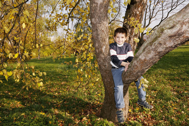 Download Cute boy on autumn tree stock image. Image of tree, autumn - 21536099