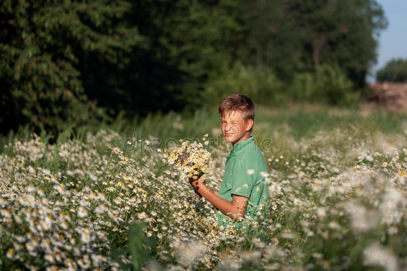 Cute boy holding bouquet of fields camomile flowers in summer day. Back view. Holiday concept stock photo