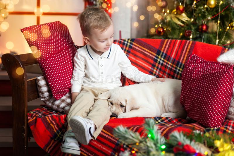 Cute boy holding a labrador puppy. Happy boy stroking a labrador puppy in a studio with a warm christmas decor. Cosy gold and red decor royalty free stock photos