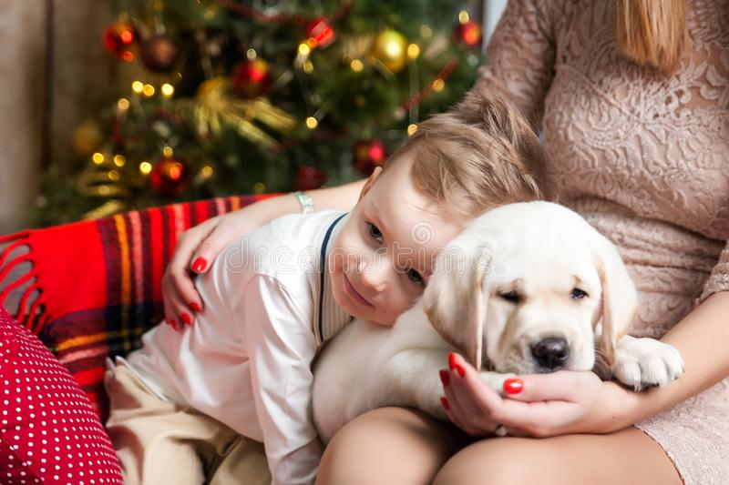 Cute boy with a mom holding a labrador puppy. Happy boy with a mom holding a labrador puppy in a studio with a warm christmas decor. Cosy gold and red decor royalty free stock image