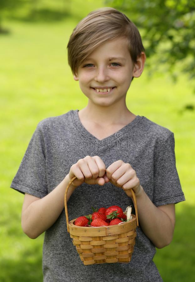 Boy with organic strawberry royalty free stock image