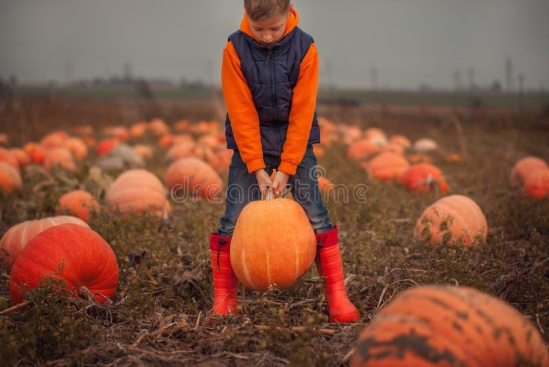 Cute boy picking out a pumpkin at pumpkin field at fall. stock photos