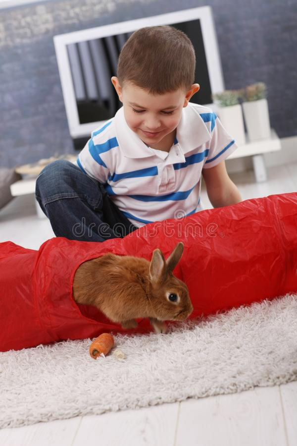 Download Cute Boy Playing With Pet Bunny Stock Image - Image: 24589853