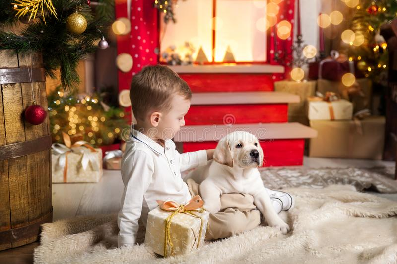 Cute boy plays with a labrador puppy. Happy boy plays with a labrador puppy in a studio with a warm christmas decor. Cosy gold and red decor stock photography