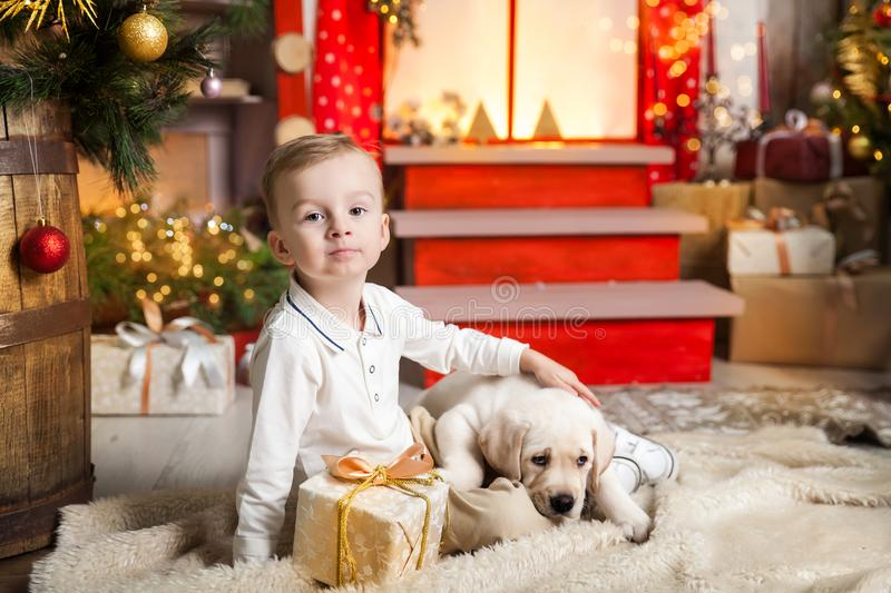 Cute boy plays with a labrador puppy. Happy boy plays with a labrador puppy in a studio with a warm christmas decor. Cosy gold and red decor stock photo