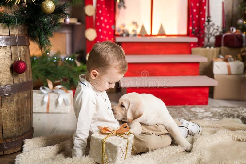 Cute boy plays with a labrador puppy. Happy boy plays with a labrador puppy in a studio with a warm christmas decor. Cosy gold and red decor royalty free stock photography