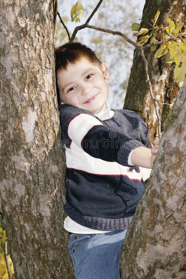 Download Cute boy on tree stock image. Image of people, sweater - 21536101