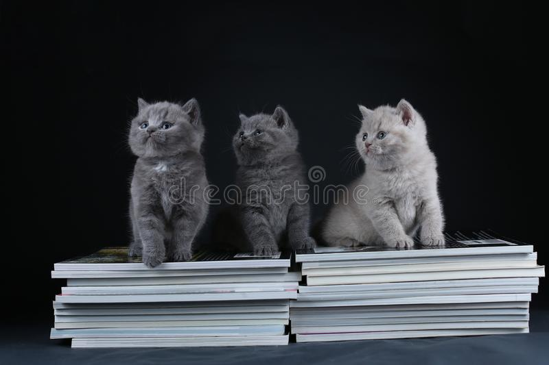 Cute kittens sitting on books, black background, copy space stock photos