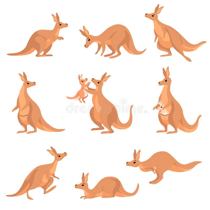 Cute Brown Kangaroo Set, Wallaby Australian Animal Character in Different Poses Vector Illustration. On White Background stock illustration