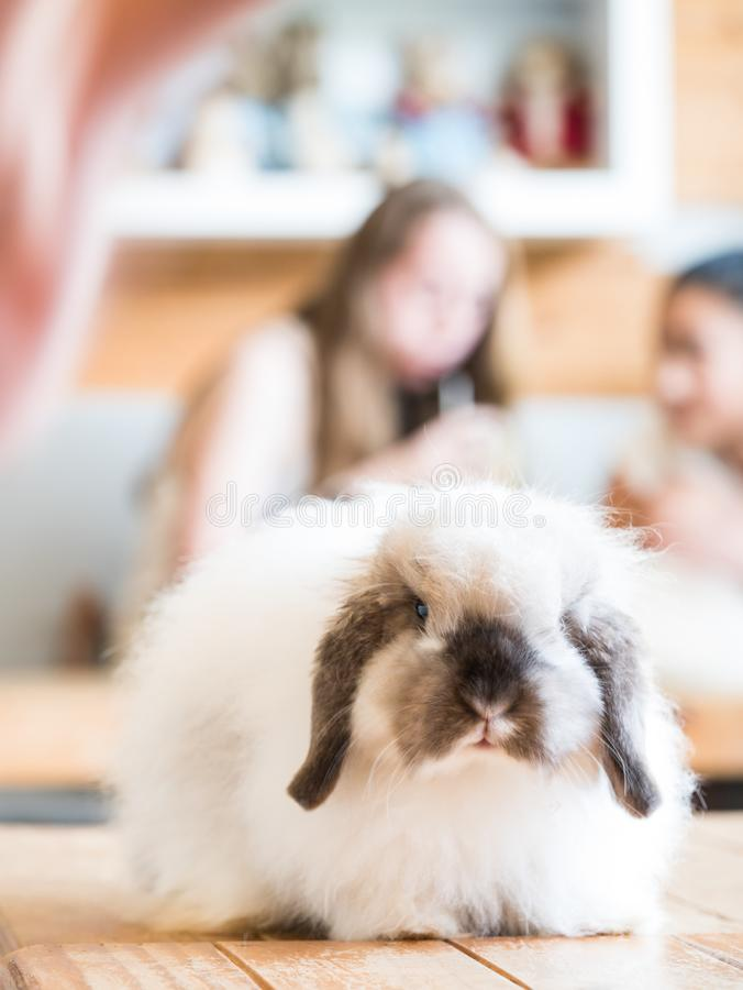 Cute rabbit show in cafe royalty free stock photo