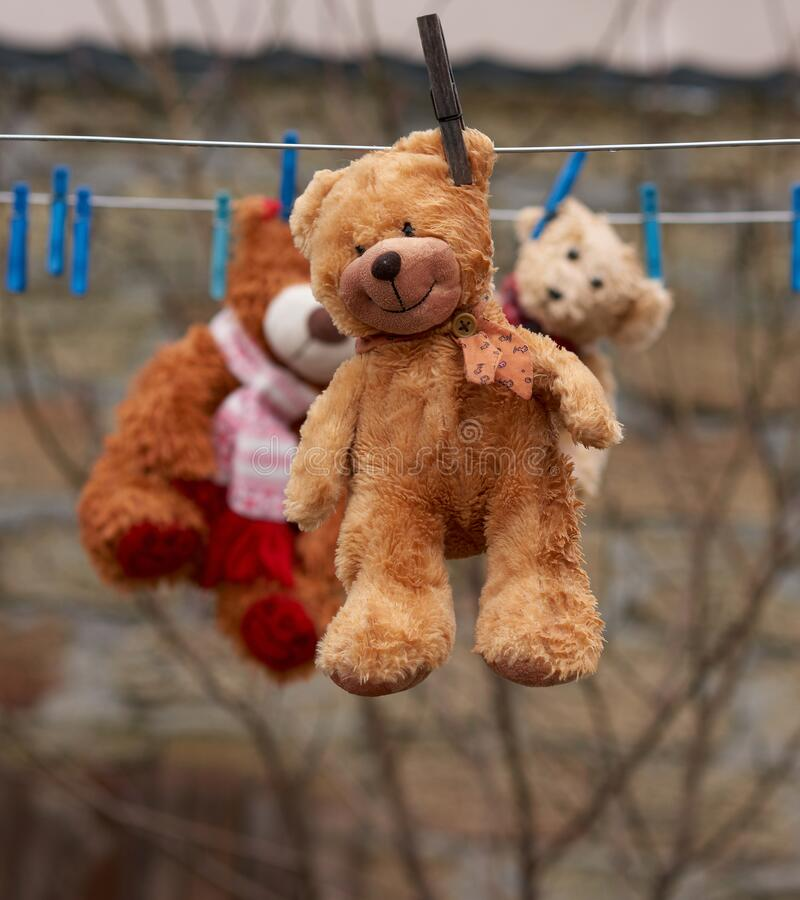 Cute brown wet teddy bear hanging on a clothesline and drying. Close up stock photos