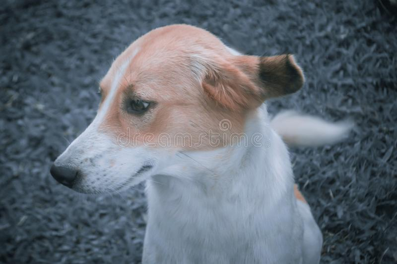 Cute brown and white dog with filter effect. Cute brown and white dog side face with filter effect stock image