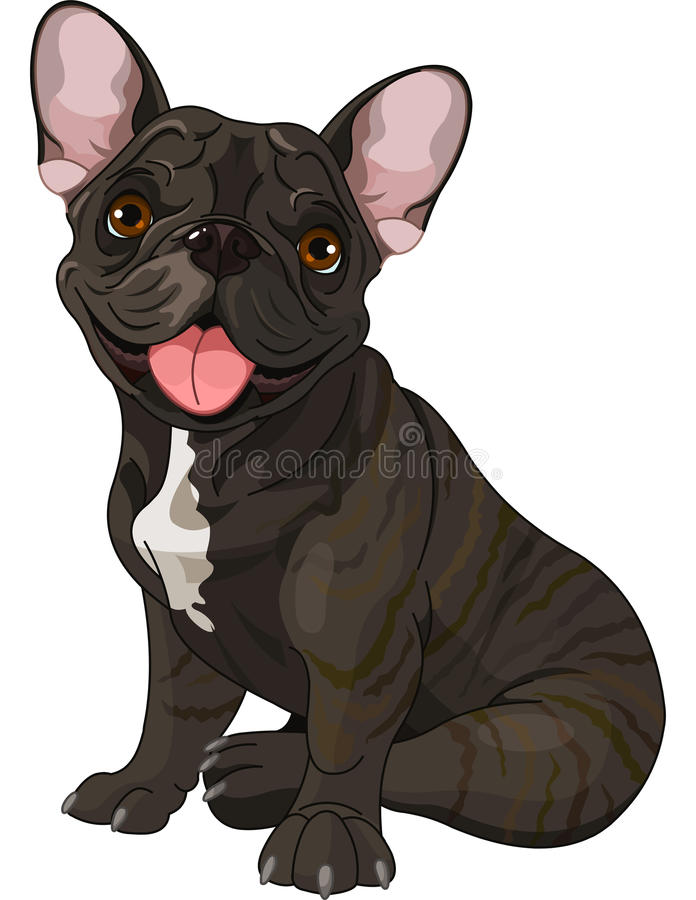 Cute bulldog. Cute French bulldog, sitting in front of white background vector illustration