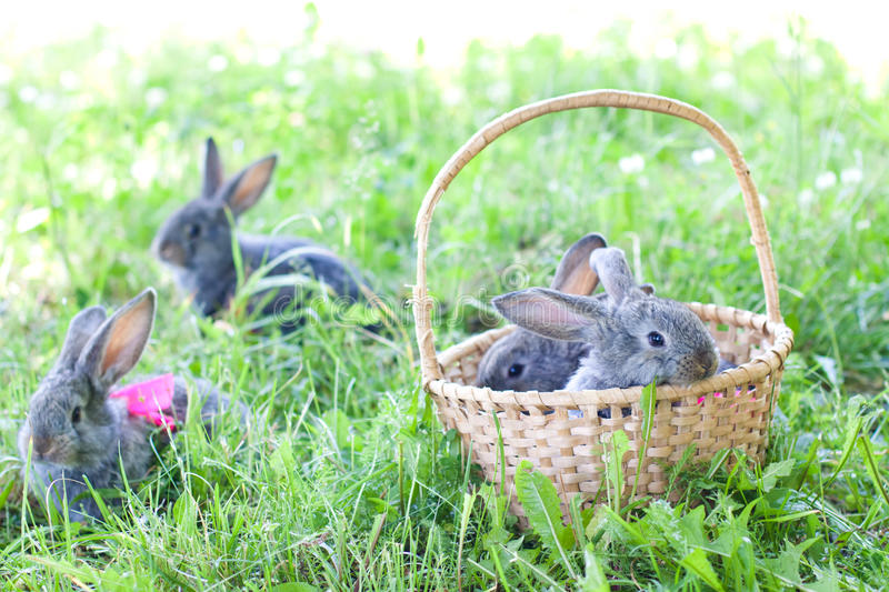 Cute bunnies outdoors royalty free stock image