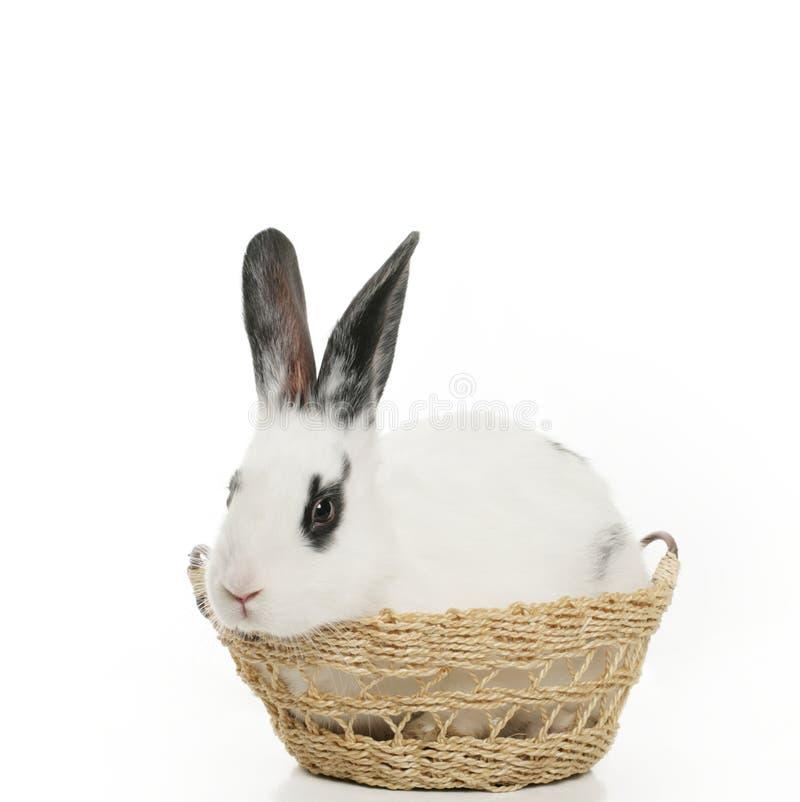 Cute bunny stock photo