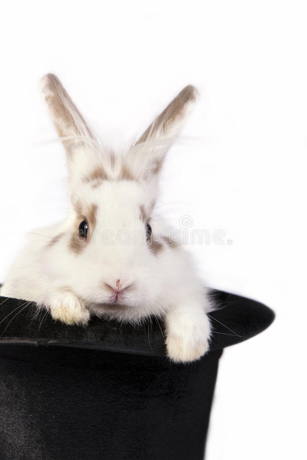 Cute bunny rabbit. In a black hat, isolated on white stock photography