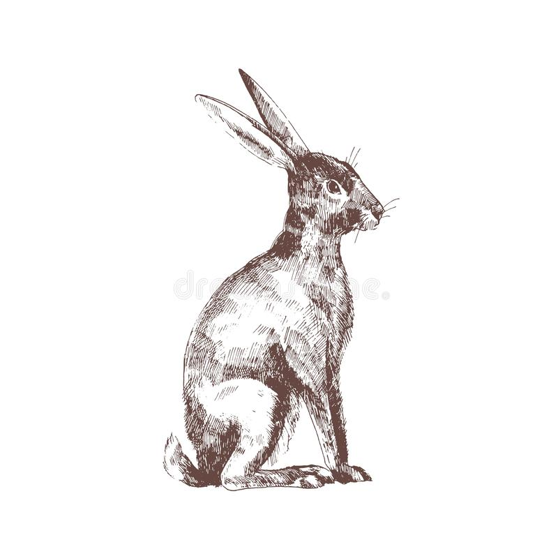 Cute bunny, rabbit or hare isolated hand drawn with contour lines on white background. Elegant drawing of funny adorable vector illustration