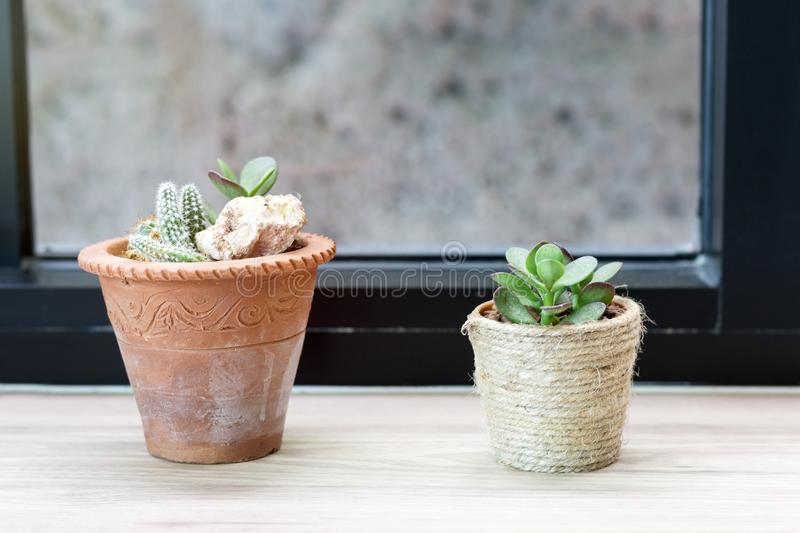 Cute Cactus in small pot with warm morning light near the window royalty free stock photos