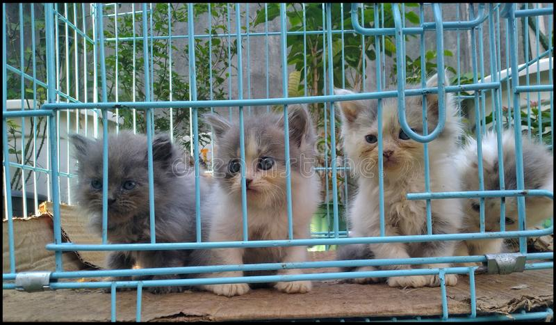 Cute caged Persian breed kittens yearning for help royalty free stock image