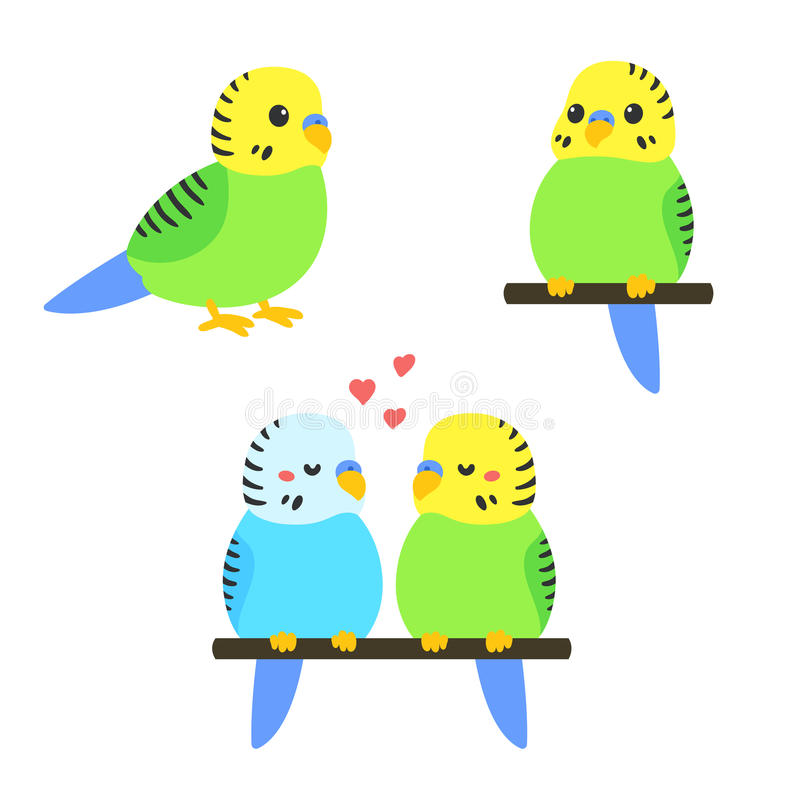 Cute cartoon budgie vector illustration