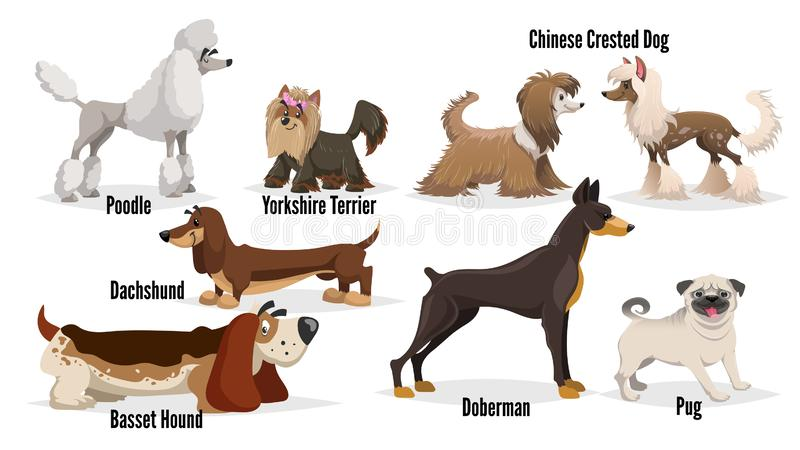 Cute cartoon dogs set. Poodle, pug, chinese crested, dachshund, doberman, basset hound, yorkshire terrier. Vector illustrations stock illustration
