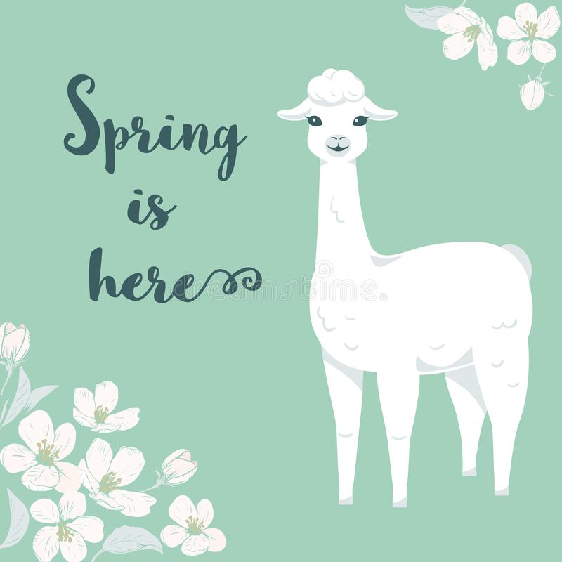 Cute cartoon llama character with cherry tree flowers and text Spring is here. vector illustration