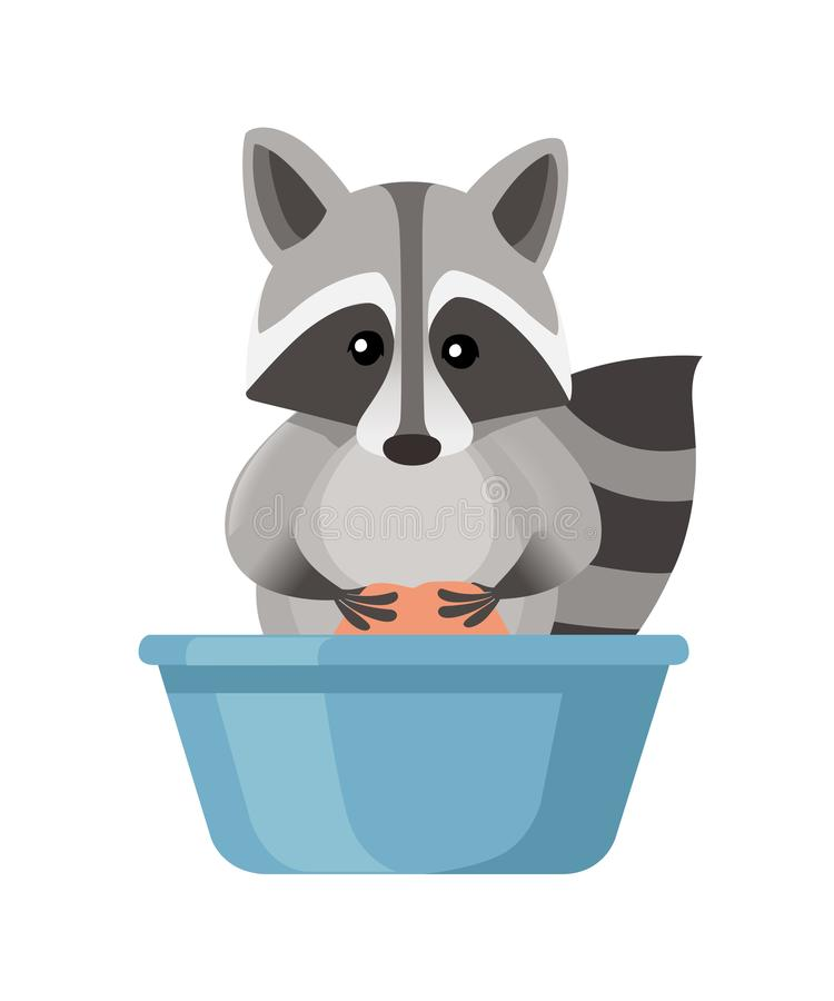 Cute cartoon Raccoon washes clothes in a plastic basin. Cartoon animal character design. Flat  illustration isolated on stock illustration