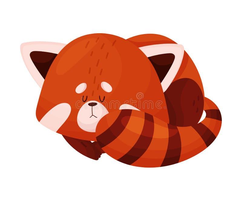 Cute Cartoon Red Panda slaapt op in Ball Vector Illustratie vector illustratie