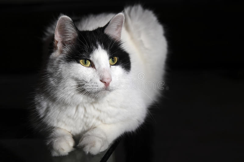 Download Cute cat stock photo. Image of cute, staring, lying, kitty - 10449118