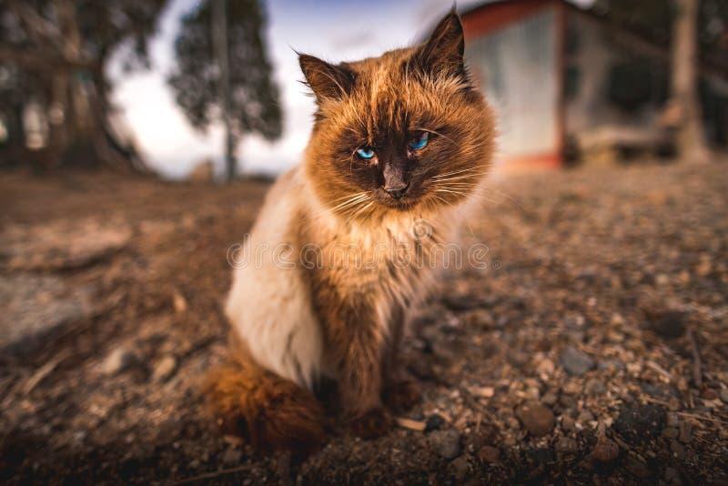 Cute Cat stock image