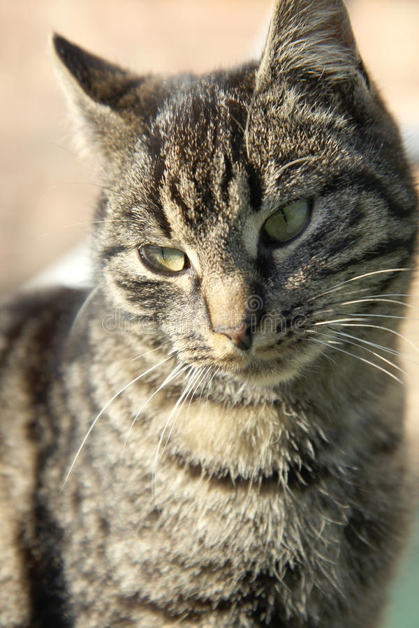 Download Cute cat stock image. Image of tabby, dark, angry, grey - 19376775