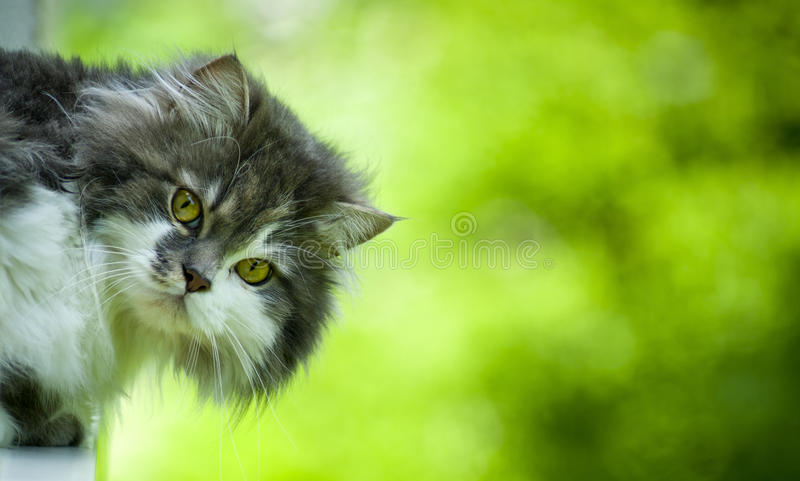 Cute cat. stock photography